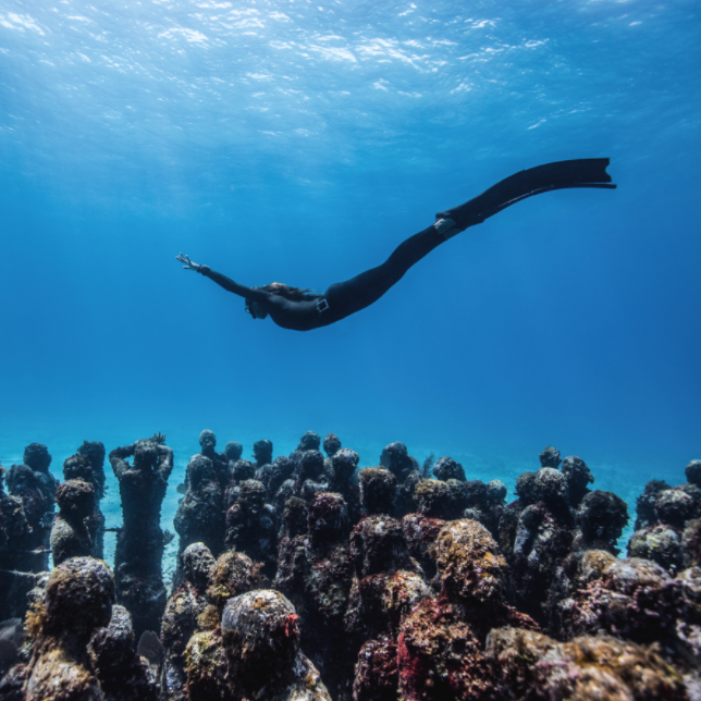 Diving Into Ocean Photography